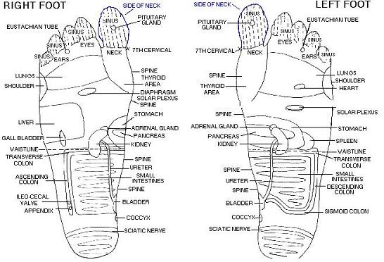 feet skin diagram